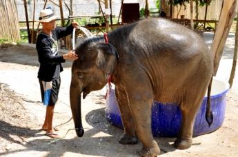 Szczęśliwe słonie w Tajlandii